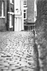Rainy Day (h_cowell) Tags: hanimex cosina ct10 rain rainy grain tmax filmphotography film analogue cobbles street streetphotography blur blurry dof macclesfield cheshire vintage filmisnotdead believeinfilm appicoftheweek monochrome bnw bw blackandwhite