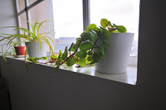 Spiders (maddpete) Tags: plants windowsill
