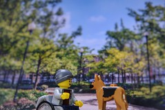 True Friendship can never be broken. (parik.v9906) Tags: outdoors indoor park togther snapseed wheelchair disabled pet bestfriends friends dog 365project project days 365days 365 d90 nikon minifigures minifigure minifig legos lego