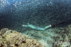 Running the reef (bodiver) Tags: hawaii kailua kona wideangle ambientlight akule apnea fins freediving freedivers peopleunderwater reef