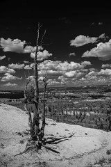 Tree at Bryce Canyon (Joy Forever) Tags: blackwhite blackandwhite monochrome usa inspired anseladamsinspired america pentax tree brycecanyon brycecanyonnationalpark rockformations clouds