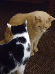 CHIP AND LEROY (photodittmer) Tags: cat leroy chip