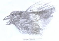 cuervo a lapiz (ivanutrera) Tags: cuervo draw dibujo drawing dibujoalápiz animal ave bird pajaro sketch sketching lapiz lápiz ilustracion