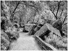 Rocky Road (claudiov958) Tags: biancoenero blackwhite blancoynegro černýabílý chwarzundweiss claudiovaldés czarnyibiały mediumformat mediumformatdigital monochrome ngc noiretblanc pentax645z pretoebranco rock utah zionnationalpark черноеибелое pentaxart hdpentaxda6452845mmf45edawsr road path trail