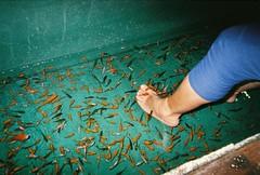 Fish Hot Spring in Wa Mu Shan - Keelung, Taiwan. (presleydelrey) Tags: film analog filmphotography analogphotography 35mm fujifilm fujifilm30thanniversary disposablecamera fish hotspring foot chinese water green orange keelung taiwan