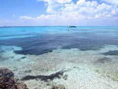 Caribbean Sea (thomasgorman1) Tags: sea ocean caribbean water boat horizon cancun view mexico canon reef coral snorkeling