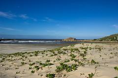 A nice afternoon on the south coast of Brazil. (Larissa Cadorin) Tags: beach beautifulseasons beachlife gulls vibrance nicephoto paisagem paysage paesaggio naturaleza nature coast bay