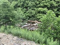 Spruce Run - High Falls (primemover88) Tags: speeder railcar excursion narcoa elkins wv west virginia durbin greenbrier valley railroad cheat river