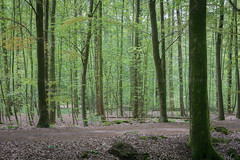 fresh green (robvanderwaal) Tags: trees robvanderwaalphotographycom 2017 bomen tree forest boom nederland netherlands nature bos rvdwaal natuur