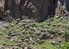 Semonkong (Hans van der Boom) Tags: holiday vacation southafrica lesotho zuidafrika semonkong maseru animal sheep mountainside lso