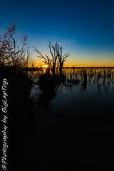 IMG_5423 (biglaptogs) Tags: barmera lakebonney riverland sa states