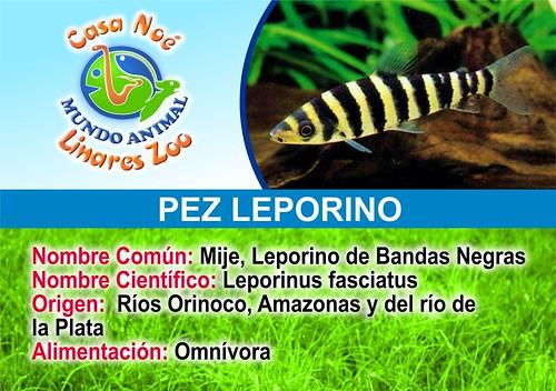 pez leporino