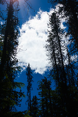 trillium lake family hike (dolanh) Tags: hiking mthoodwilderness oregon trees clouds trilliumlake