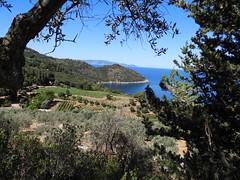 orti sul mare (giorgio 12) Tags: mare orti alberi azzurro argentario