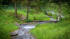 The River (George Nutulescu) Tags: nikon nature water cascade travel tree trees transilvanya romania river