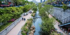 2017 - Korea -Seoul City - 11 of (Ted's photos - For Me & You) Tags: 2017 cropped korea nikon nikond750 nikonfx seoul tedmcgrath tedsphotos vignetting cheonggyecheonstream urbanrenewalseoul seoulkorea people peopleandpaths cheonggyecheon cheonggyecheoncanal cheonggyecheonseoul