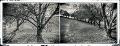 Trees (dougkuony) Tags: trees memorialpark omaha mono monochrome bw blackandwhite frame hdr