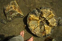 moeraki 11 (Bilderschreiber) Tags: moeraki bolders kugeln sphere stone stein beach strand feet füse neuseeland newzealand südinsel southisland me broken inside ball globe steinkugel