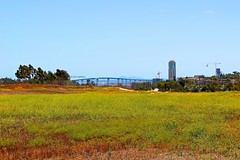 From North Park To Coronado (Art By Pem Photography: Tao Of The Wandering Eye) Tags: fineartphotography canon canoneosrebelsl1 eos sl1 california southerncalifornia socal sandiego northpark coronado coronadobridge field flowers color colour colors colours nature blue green sky bridge usa scenicsnotjustlandscapes