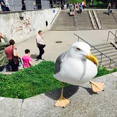 Seagull life (elinapoisa) Tags: seagull riga bird beak