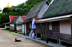 ,, Roof Maintenance ,, (Jon in Thailand) Tags: nun nuns newnun musclenun street streetphotography jungle buddha ladder dog k9 littlestubby bucket orange red gold green bridge roof roofs nikon nikkor d300 175528 skybridge bungalows littledoglaughedstories