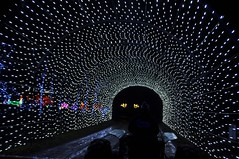 19 Light Tunnel (megatti) Tags: buckscounty christmas christmaslights pa pennsylvania shadybrookfarm tunnel yardley