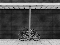 fixed bikes (heinzkren) Tags: bicycle storage parkplatz parking cyclerack lines curves urban street architecture architektur schwarzweis sw bw blackandwhite biancoetnero noiretblanc abstellplatz fahrradabstellplatz fahrrad wien vienna kagran kaisermühlen donaucity city panasonic monochrome geometry