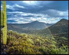 Sonoran Desert Near Cave Creek, Arizona (J P Cee) Tags: diycolor film analogphotography hills mountains c42 pentax67 pentax45mm rainbow rain desert sonorandesert hawk mediumformat 120film saguaro saguaros southwest americana colornegativefilm homebrew