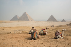 Pyramid Crew (discovermarco) Tags: desert egypt pyramids giza cairo landscape camels