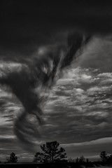tree exorcism... (Alvin Harp) Tags: cloudsstormssunsetssunrises winterstorm stormclouds trees windy natureswonder january 2017 wyoming i80 sonyilce7rm2 fe24240mm alvinharp