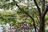 Spring Blossoms (Wes Iversen) Tags: bokehwednesday chicagobotanicgarden glencoe hbw illinois nikkor50mmf18 spring weepingwillows willowtrees blossoms bridges flowering flowers lakes trees footbridges