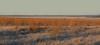 Helada grande (Eduardo Amorim) Tags: helada escarcha geada frost ice frio invierno inverno gado ganado cattle bétail bestiami vieh vaca cow vache mucca kuh boi buey ox boeuf mue rind vacas cows vaches mucche kühe bois bueyes oxen boeufs buoi rinder touro toro bull taureau stier touros toros bulls taureaux tori stiere hereford colonialibertad montecaseros corrientes provinciadecorrientes corrientesprovince argentina sudamérica südamerika suramérica américadosul southamerica amériquedusud americameridionale américadelsur americadelsud eduardoamorim
