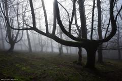 Creepy forest (Hector Prada) Tags: bosque niebla invierno encantado árbol misterioso luz atmosfera musgo forest fog mist enchanted creepy tree mood moss winter misterious naturaleza nature paisvasco basquecountry