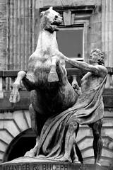 Alexander and Bucephalus (just.Luc) Tags: europa europe escultura estatua sculpture statue statua standbeeld standbild horse paard pferd cheval man male homme hombre uomo edinburgh edinbourgh royaumeuni verenigdkoninkrijk unitedkingdom grootbrittanië grandebretagne greatbritain scotland schotland ecosse alexanderdegrote alexanderthegreat monochrome monochroom bw zw bn nb bucephalus art kunst brons bronze gay citychambers stadhuis hôteldeville