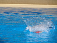 DSC00618 (jrucker94) Tags: vegas water dolphin swimming show secretgarden