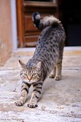 _DSC8438_PFT_v1 (Pascal Rey Photographies) Tags: chat chatte cat gato gatto katze animalerie animals animales animali extérieur outside outdoor photographiecontemporaine pascalreyphotographies nikon d700 pet compagnon