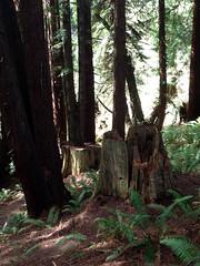 SequoiaPark032413c (homeboy63) Tags: spring 2013 humboldt sequoiapark eureka fauna