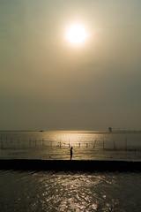 sunset in tokyo bay (N.sino) Tags: m9 summilux50mm sunset tokyobay kisarazu egawabeach 木更津 夕日 江川海岸 影 シルエット 電柱