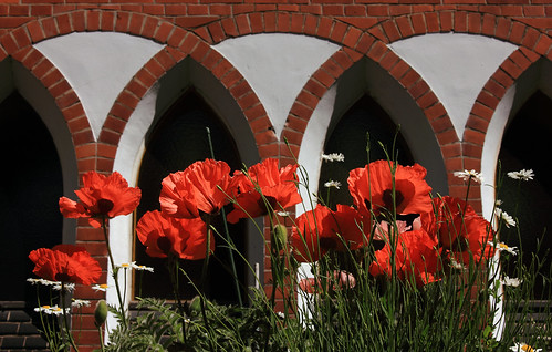 """Mohn (01) • <a style=""""font-size:0.8em;"""" href=""""http://www.flickr.com/photos/69570948@N04/34753757950/"""" target=""""_blank"""">View on Flickr</a>"""