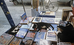 Cats sleeping in display book window (Jim Corwin's PhotoStream) Tags: lifestyle editorial humaninterest universitydistrict theave seattle photography horizontal portrait attitude citylife streetscenes urbanscenes nonconformity casual individuality eccentric outdoors alongstreet sleeping sleep sleepy cat cats catsasleep displaywindow bookstore bookstorealongave retro 1990s uniqueplace books booksonsale