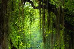 Quinta da Boa Vista (Johnny Photofucker) Tags: riodejaneiro rj verde vegetação quintadaboavista parque park parco parc green epífitas epífita mataatlântica rainforest árvore tree albero alberi árvores trees 24105mm lightroom brasil brazil brasile