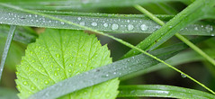 Autobahn (dmitrytsaritsyn) Tags: green grass nikon d3x 105mm outdoor raindrops r1c1