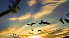 volando a casa (in explored) (Momoztla) Tags: mexico momoztla atardecer nubes sol gaviotas