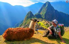 Machu Picchu, Peru (Travel Center UK) Tags: touristattractions tourist alpaca machu picchu wonders worldwonders peru travelcenteruk traveller travel