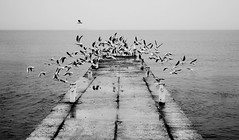 1608 (photoksenia) Tags: dmcgm5 panasonic sea seagull monochrome bw blackandwhite beach