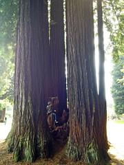SequoiaPark032413b (homeboy63) Tags: spring 2013 humboldt sequoiapark eureka fauna