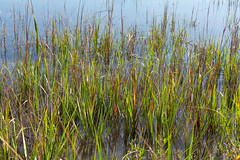 Salt Marsh-SC  2015-12-28_023 (hernanvazquezphotos) Tags: palmcoast southcarolina usa