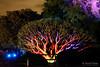 20170531-39-VIvid Light display at Sydney Botanic Gardens (Roger T Wong) Tags: 2017 australia nsw newsouthwales rogertwong sel2470z sony2470 sonya7ii sonyalpha7ii sonyfe2470mmf4zaosscarlzeissvariotessart sonyilce7m2 sydney sydneybotanicalgardens vivid festival illuminated lights night tree