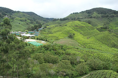 Sungai Palas Boh Tea Estate (iparky) Tags: cameronhighlands malaysia tea sungaipalas sungaipalasbohteaestate bohtea