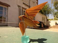 Sparrowhawk (Mdanger217) Tags: max danger origami sparrowhawk design tissue foil